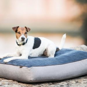cama perros kentucky