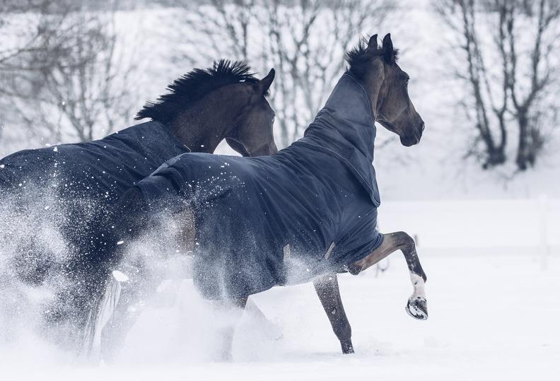 que mantas elegir para mi caballo