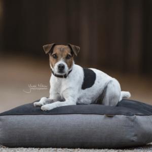 cama perro almohadon