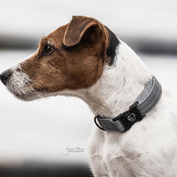 collar reflectante kentucky