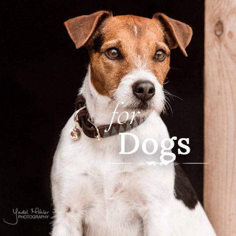 kentucky perros