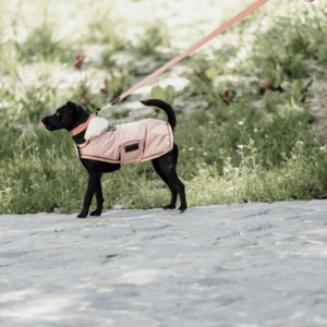 manta para perros kentucky