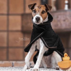 manta toalla kentucky perros