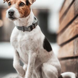 collar perros kentucky